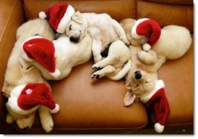 christmas-santa-puppies